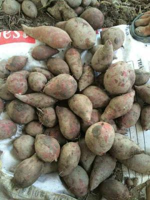 广西壮族自治区崇左市凭祥市越南紫薯 混装通货