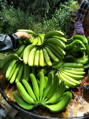 这是一张关于威廉斯香蕉 七成熟的产品图片