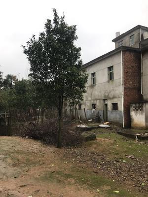 江西省九江市九江县天香