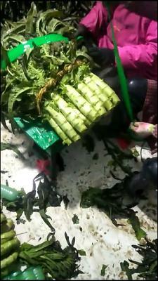 这是一张关于紫叶香莴笋 40-50cm 1.5~2.0斤的产品图片