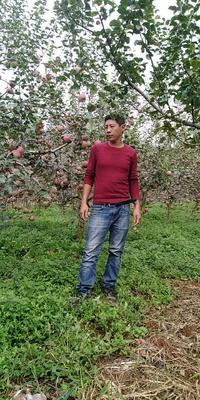 云南省昭通市昭阳区红富士苹果 光果 片红 70mm以上