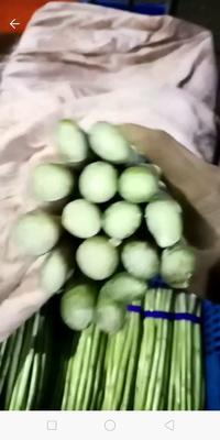 江苏省无锡市宜兴市绿芦笋 32cm以上 10mm以上