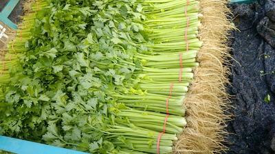 山东省泰安市新泰市香芹 50~55cm 大棚种植 0.5斤以下