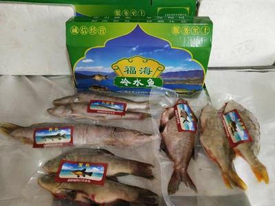 新疆维吾尔自治区乌鲁木齐市水磨沟区福海野生冷水鳊鱼 野生 1-1.5公斤