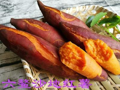 福建省漳州市南靖县红皮蜜薯 红皮 3两以下