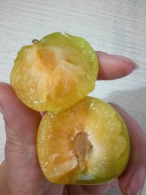 蜂糖李树苗