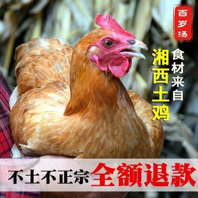 湖南省湘西土家族苗族自治州吉首市鸡肉类 新鲜