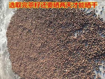 广西壮族自治区南宁市兴宁区茶叶籽油