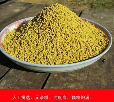 河南省驻马店市西平县油菜花粉 12-18个月