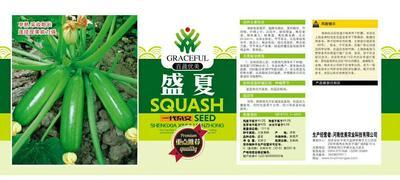 河南省周口市商水县西葫芦种子