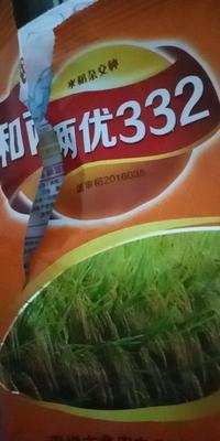 湖南省长沙市浏阳市杂交稻 中稻