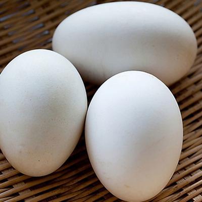 山东省德州市德城区鲜鹅蛋 食用 散装