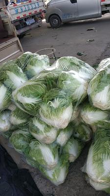 河南省焦作市博爱县秦白系列 6~10斤 净菜