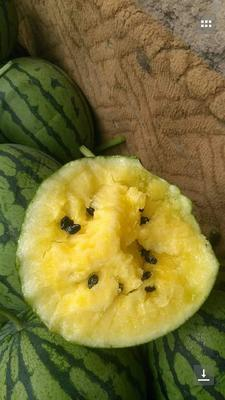 甘肃省武威市凉州区京欣西瓜 有籽 2茬 9成熟 3斤打底