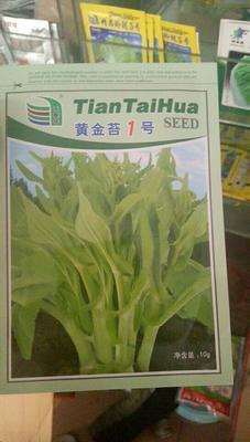 白菜苔种子