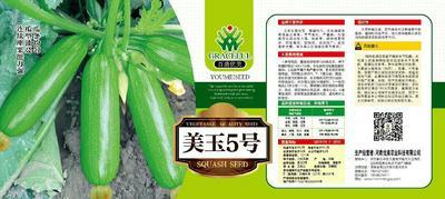 河南省周口市商水县金珠西葫芦种子