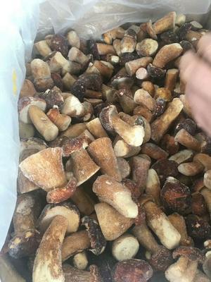 云南省昆明市官渡区鲜牛肝菌 野生 1.0%以下 1.0%以下 鲜货