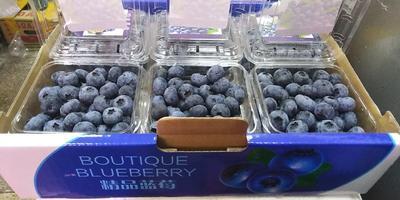 云南省昆明市五华区蓝丰蓝莓 鲜果 15mm以上