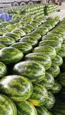 云南省德宏傣族景颇族自治州瑞丽市p2西瓜 有籽 1茬 7成熟 15斤打底