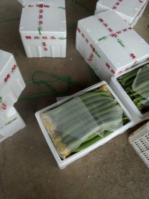山东省潍坊市寿光市鲜花丝瓜 50~70cm
