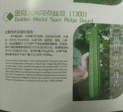 福建省漳州市南靖县丝瓜种子