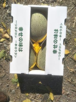上海青浦区86王哈密瓜 5斤以上