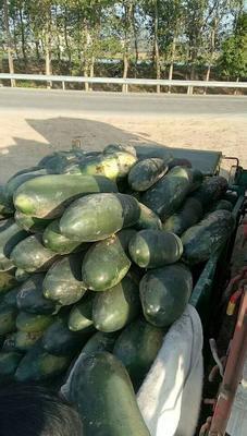 湖南省岳阳市君山区子弹头黑皮冬瓜 15斤以上 黑皮
