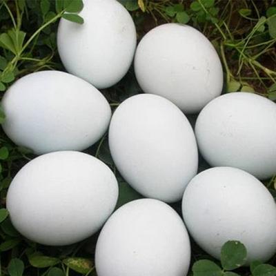 山东省德州市德城区鲜鹅蛋 食用 箱装