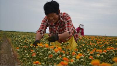 新疆维吾尔自治区乌鲁木齐市沙依巴克区红花