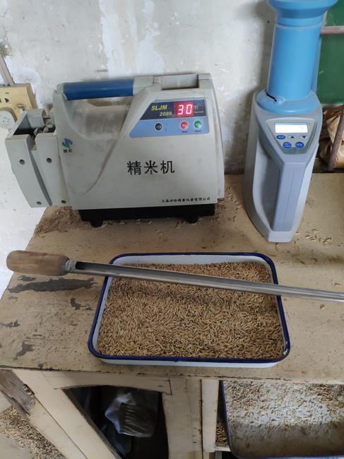 籼稻谷 中稻