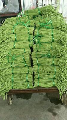广西壮族自治区北海市合浦县绿翡翠长豆角 40cm以上 打冷
