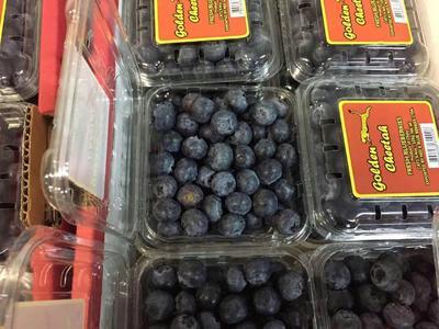 广东省广州市白云区智利蓝莓 鲜果 15mm以上