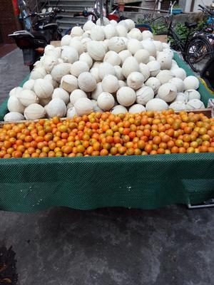 广东省深圳市龙岗区小白椰 1 - 1.5斤