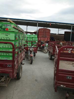 甘肃省武威市凉州区京欣西瓜 有籽 1茬 8成熟 3斤打底