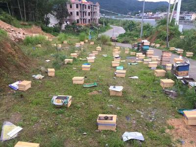 福建省莆田市涵江区中华蜜蜂