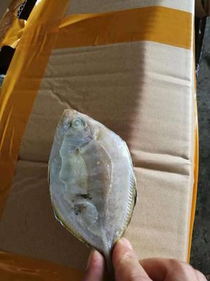 广西壮族自治区北海市海城区白鲳 野生 0.5公斤以下