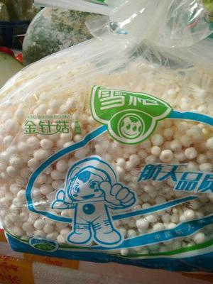 广东省惠州市惠阳区雪榕金针菇 10cm~13cm <1.5cm 未开伞 一级