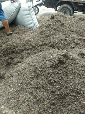 河北省保定市安国市马齿笕种子 种薯类