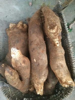 湖南省郴州市宜章县白板薯 2斤以上