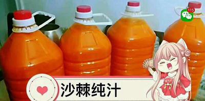新疆维吾尔自治区塔城地区和布克赛尔蒙古自治县沙棘果 桔红色