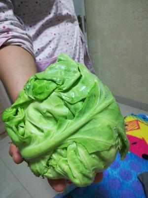 山东省淄博市淄川区卷心包菜 1.5~2.0斤