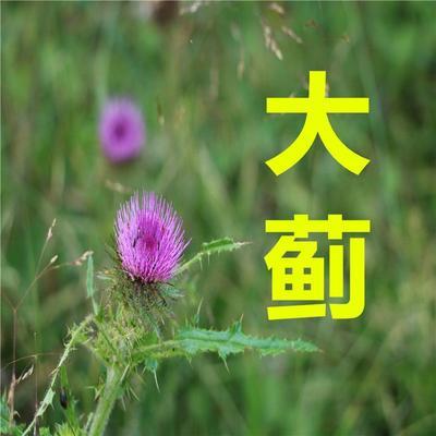 甘肃省定西市渭源县大蓟
