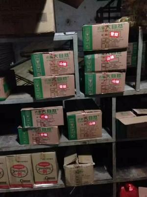 山东省青岛市市北区黄桃罐头 18-24个月