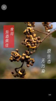 江西省九江市修水县红拐枣