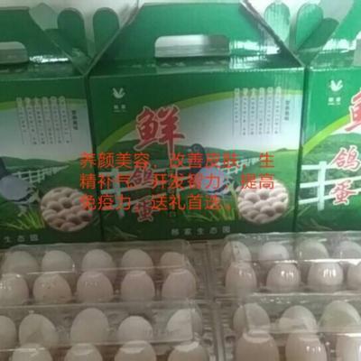 河南省洛阳市孟津县泰深鸽蛋 食用 箱装