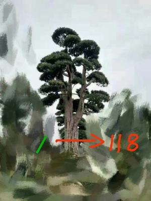 四川省雅安市雨城区罗汉松