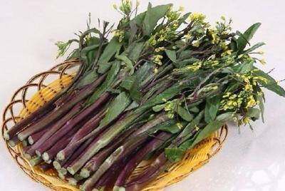 湖北省孝感市汉川市红菜苔 10cm以上