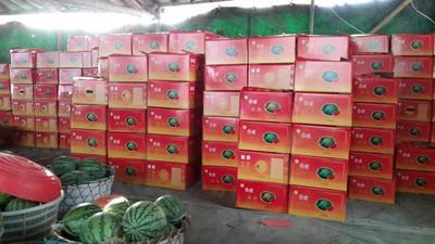 广东省汕尾市海丰县8424西瓜 有籽 1茬 9成熟 6斤打底