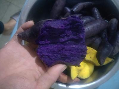 山东省潍坊市临朐县越南紫薯 3两~6两