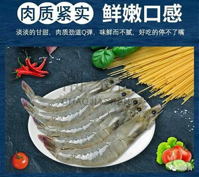 广东省汕头市金平区中国对虾 野生 5-7钱